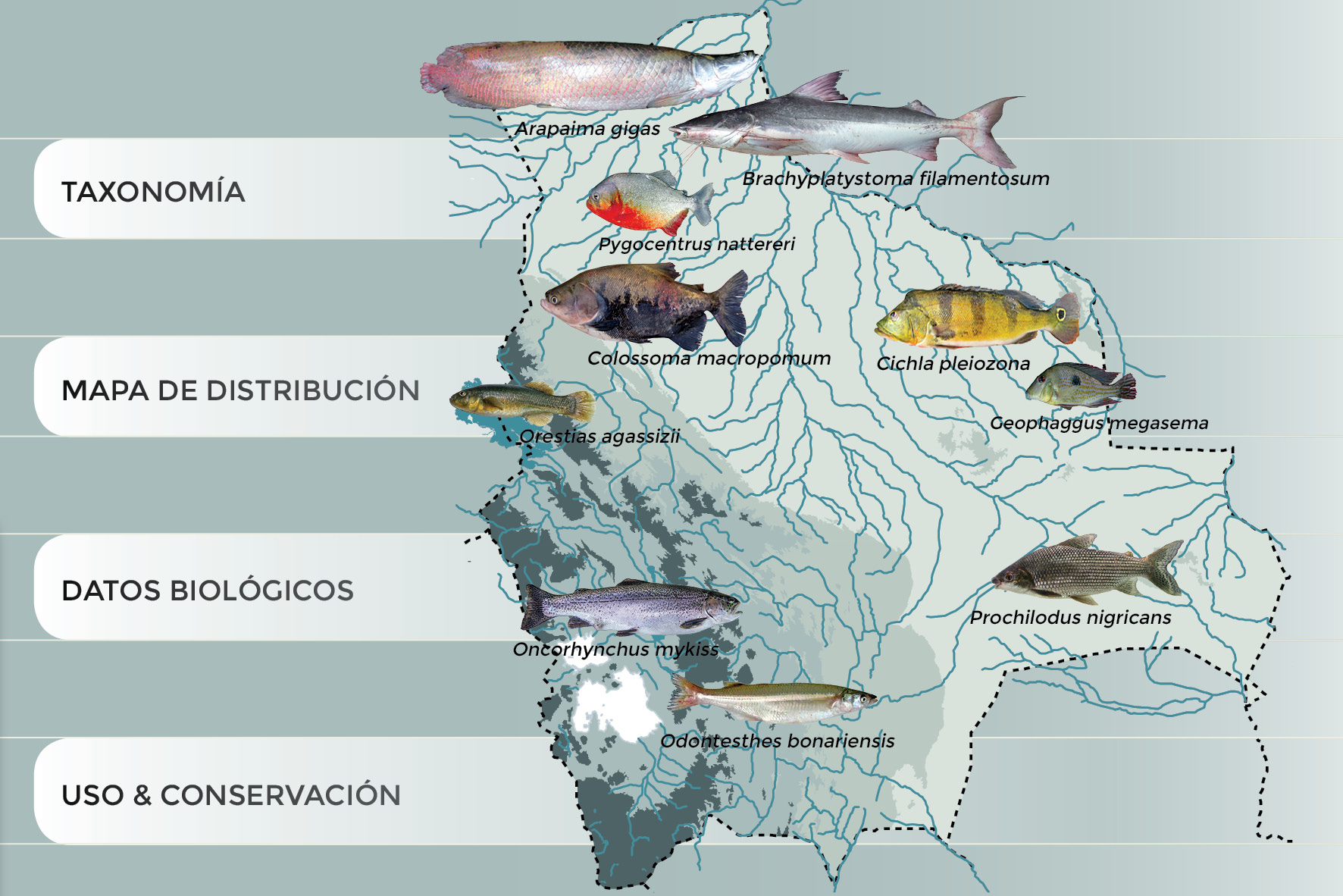 Atlas Text peces de Bolivia